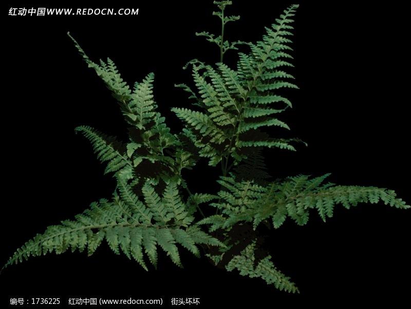 绿叶室外景观植物