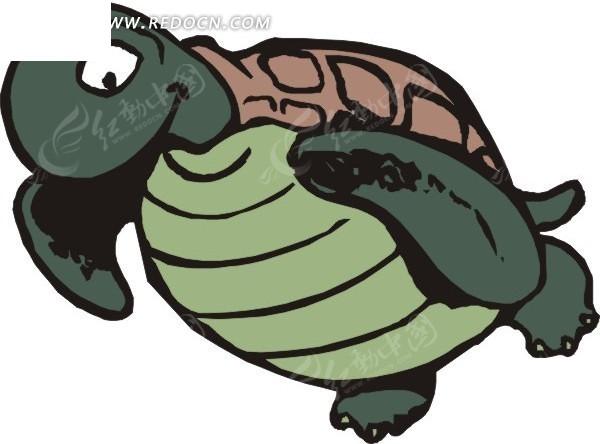 乌龟卡通画