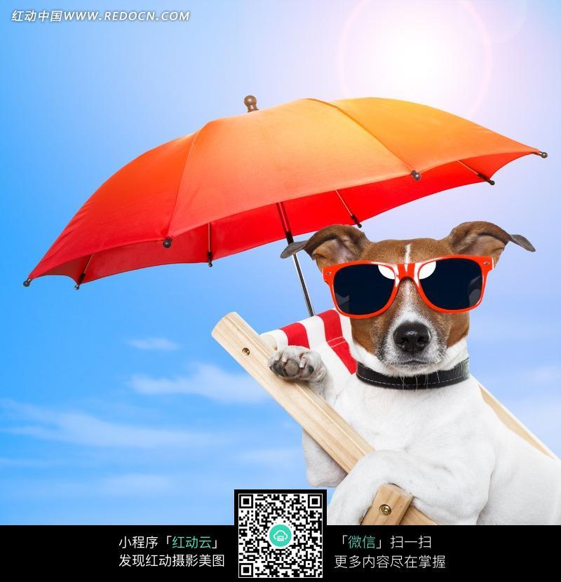 搞笑 太阳伞 动物 生物 狗 太阳眼镜 海边 度假 天空 沙滩椅 动物图片