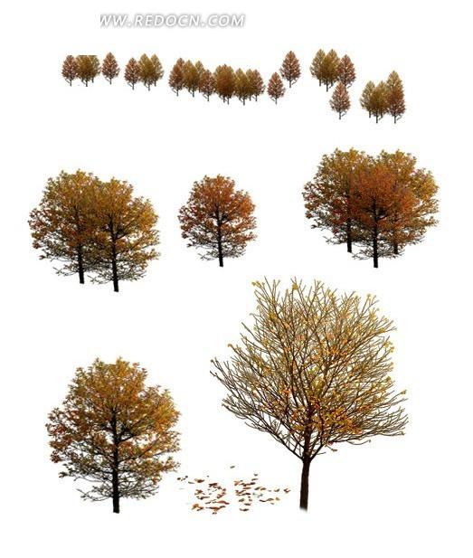 秋天树木抠图素材