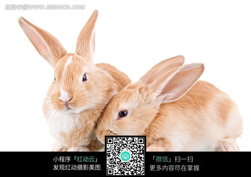 兔子结果猫壁纸动物小猫猫咪800_564桌面和蟒蛇大战老虎图片