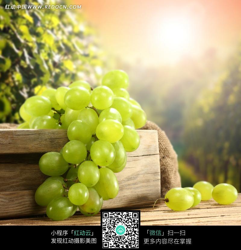 桌子上一串晶莹的绿葡萄