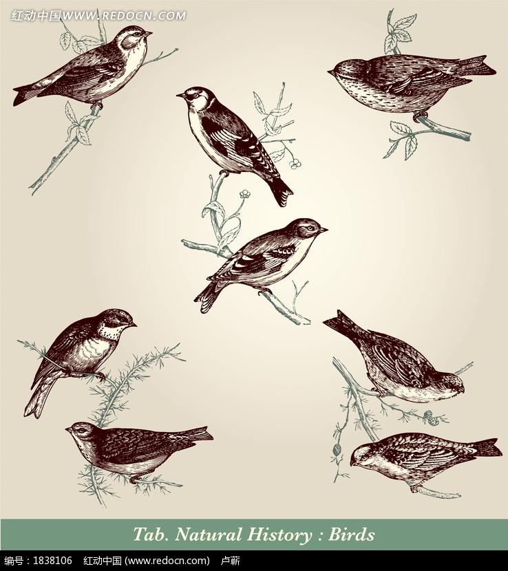 树枝上的野生鸟类素描画稿