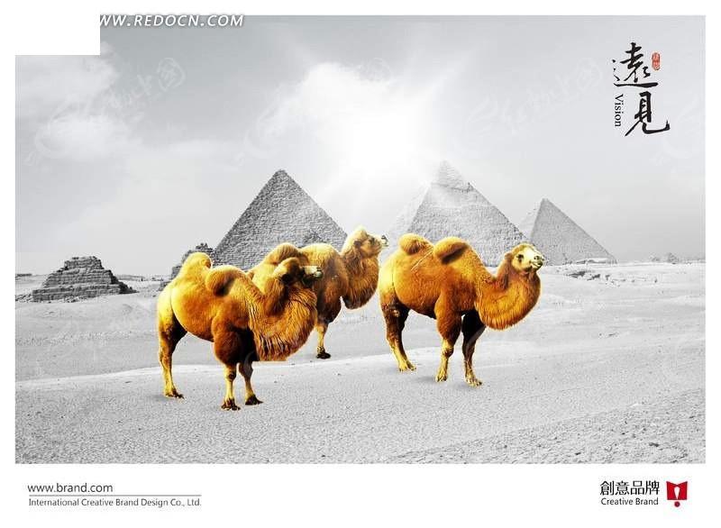 中的骆驼mp3 沙漠中的骆驼歌谱