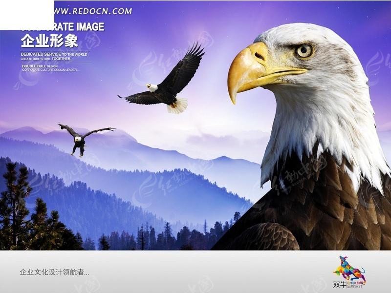 展翅翱翔的雄鹰