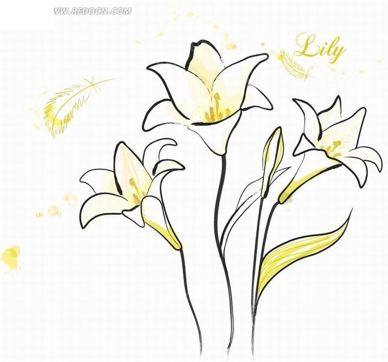 手绘黄色线条剑兰花图片