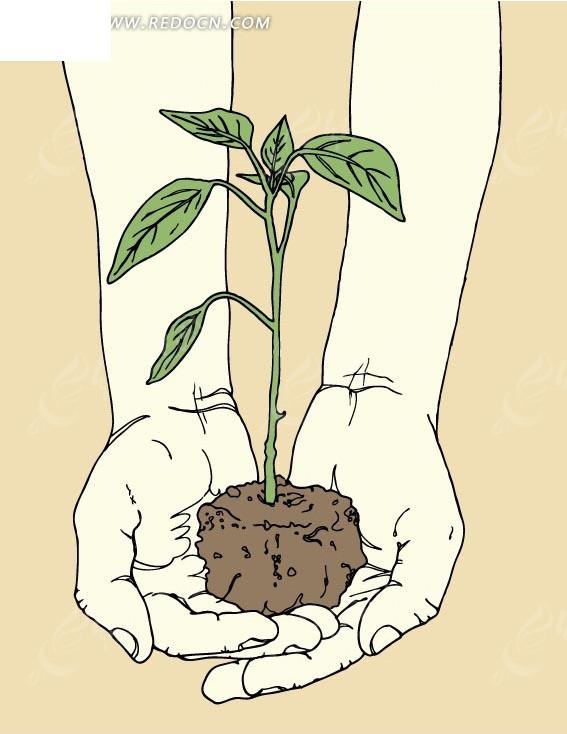 手绘线条双手捧一株植物矢量图