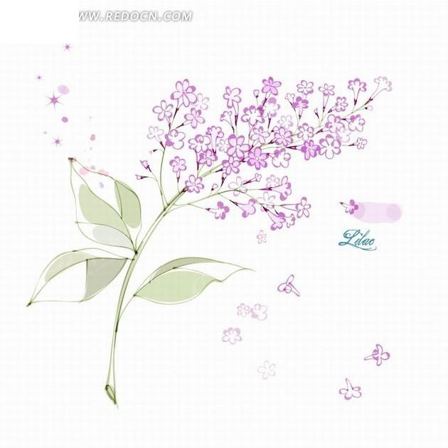 医药丁香lilac插画丁香花和花卉蝴蝶园紫色数据库图片