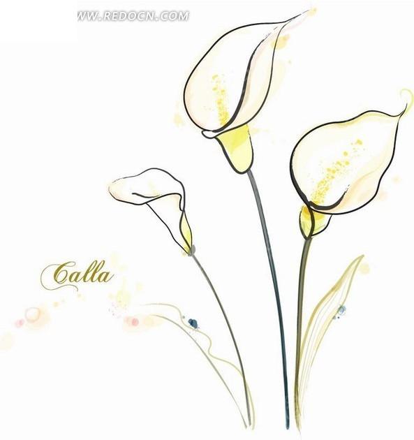 花卉插画手绘洁白的马蹄莲