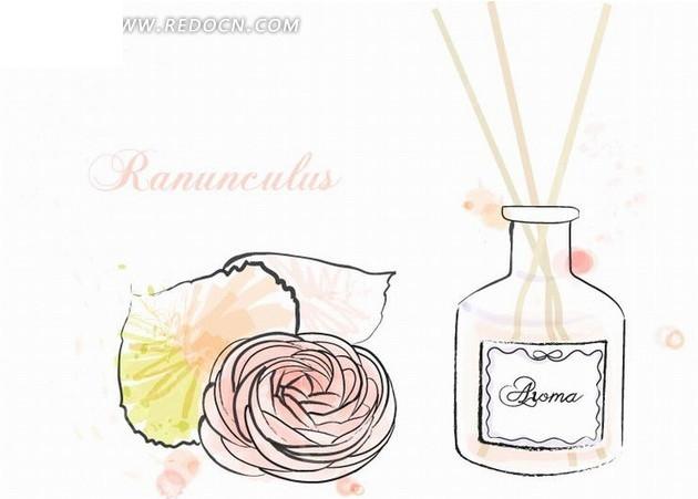 花卉插画手绘粉红的花毛茛和香水瓶