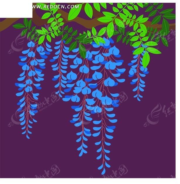 紫色背景上的插画绿叶和蓝色紫藤花