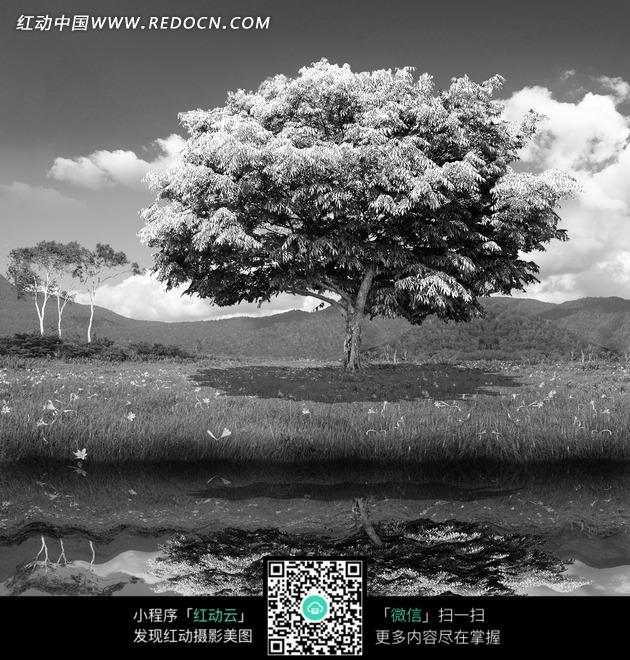 免費素材 圖片素材 文化藝術 書畫文字 黑白風景湖泊草岸的大樹和倒影