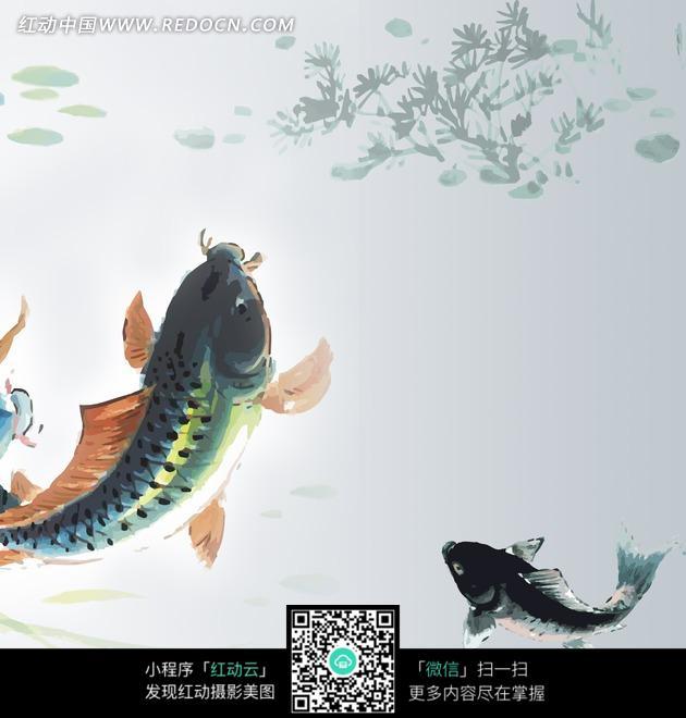 水中的两条鲤鱼水墨画图片