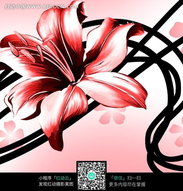 花卉插画 百合花 鲜花 舞动 藤蔓 红色百合 花朵  无框画 装饰画 书画