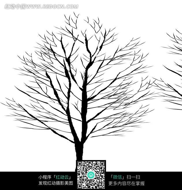 一棵黑白的树木图片