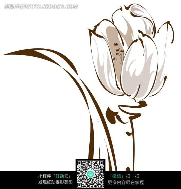 花卉插画线描郁金香鲜花