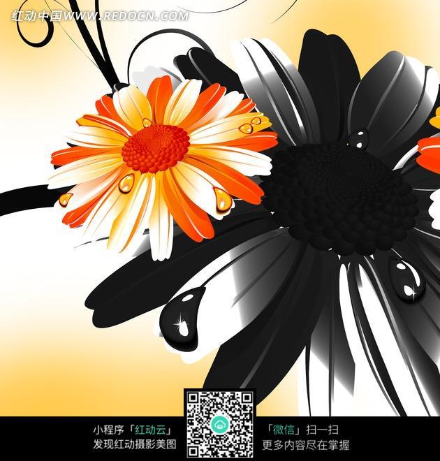 花卉插画黑白水墨藤蔓的水滴菊花