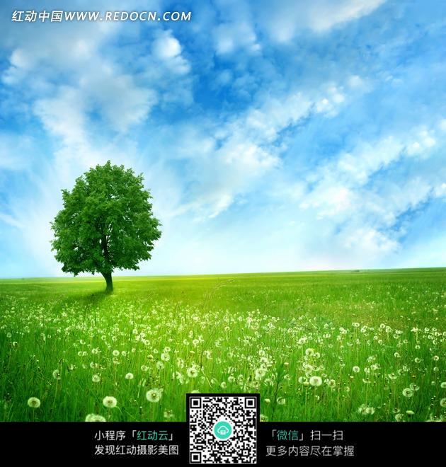 绿色草地上的小树图片 高清图片