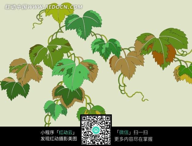 绿藤叶子背景图片