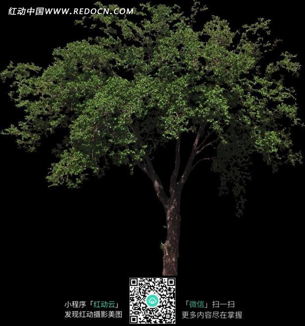 一棵大树 植物图片 植物