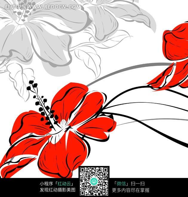 花卉插画盛开的红色朱槿花图片免费下载 红动网