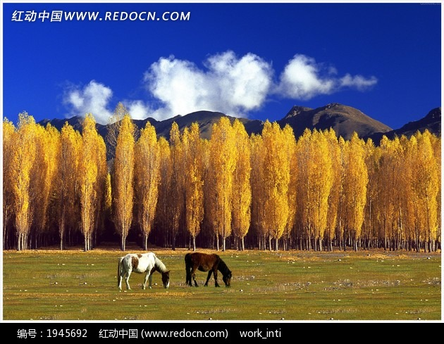 草比黄色图片网站_黄色树林草地骏马图片免费下载_红动网