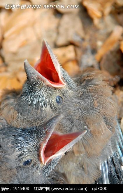 免费素材 图片素材 生物世界 空中动物 小鸟 喂食