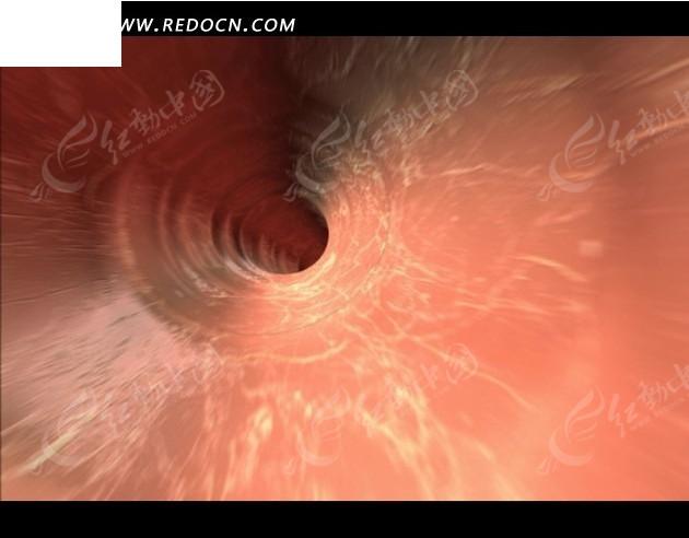 人体写真视频高清下载_人体血管特写