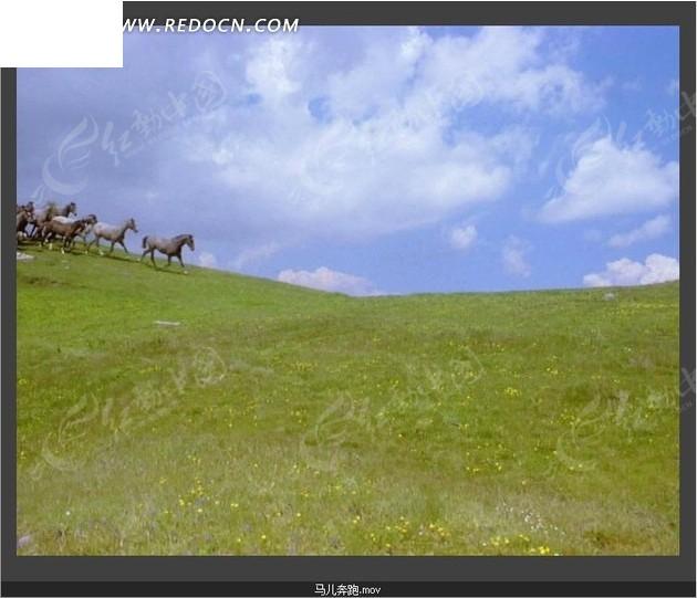 动物世界视频 牧场草原 蓝天 奔跑 骏马 马群 实拍视频 视频素材 宣传
