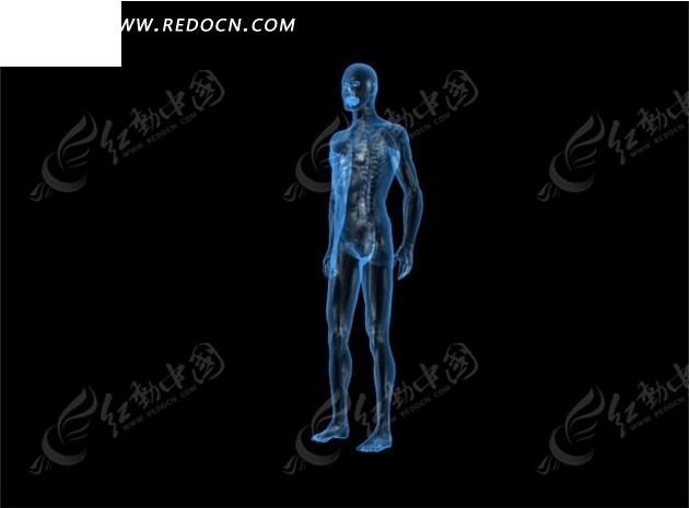 人体写真视频高清下载_三维人体视频片头