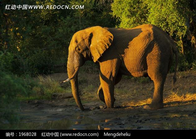 休闲的大象摄影图片_陆地动物图片