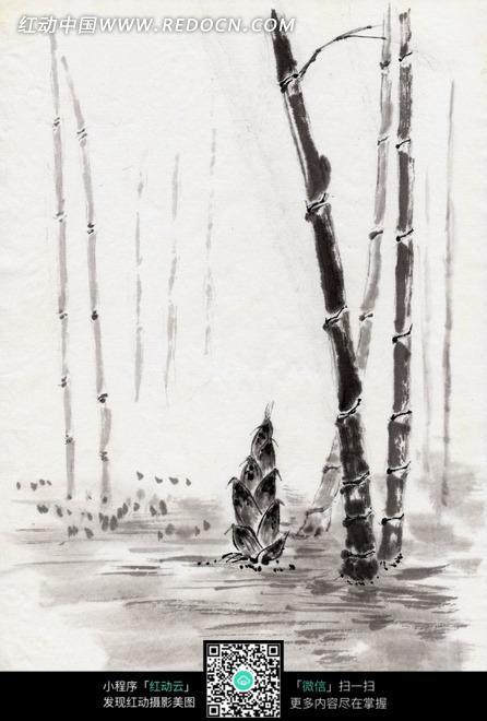 绘画作品 竹林中的竹子和一棵竹笋图片图片