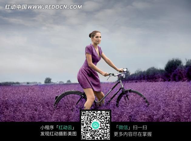 薰衣草中间骑自行车的美女图片