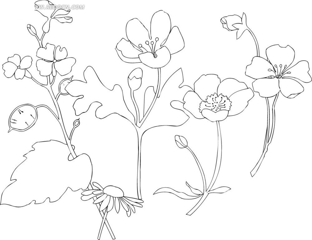 花朵盛开的植物线描画