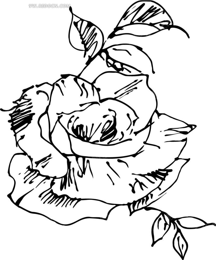 手绘黑色叶子和绽放的玫瑰花