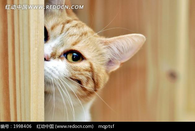 藏在门后的可爱猫咪图片图片-动物|植物|生物图片下载(编号:1998406)