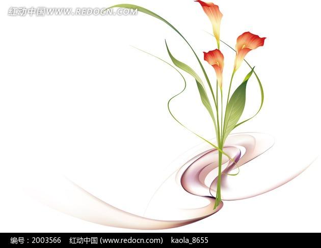 手绘花卉马蹄莲