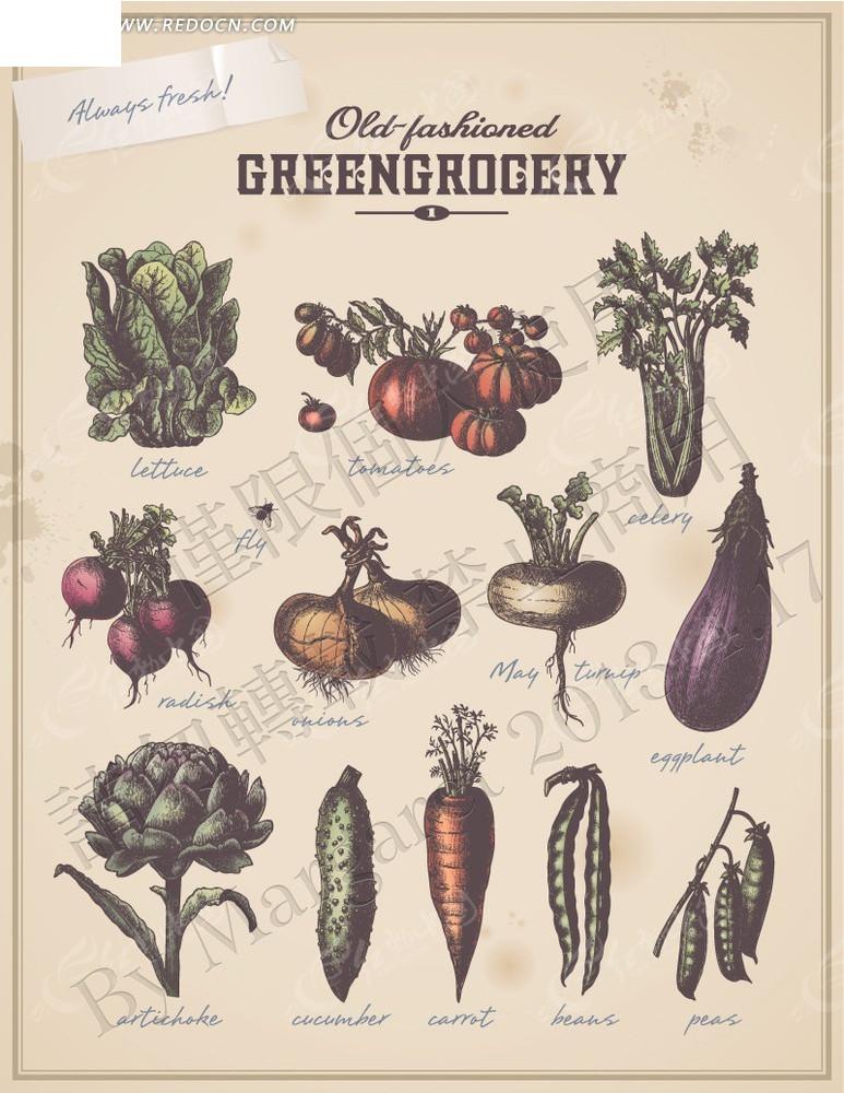 手绘素描蔬菜