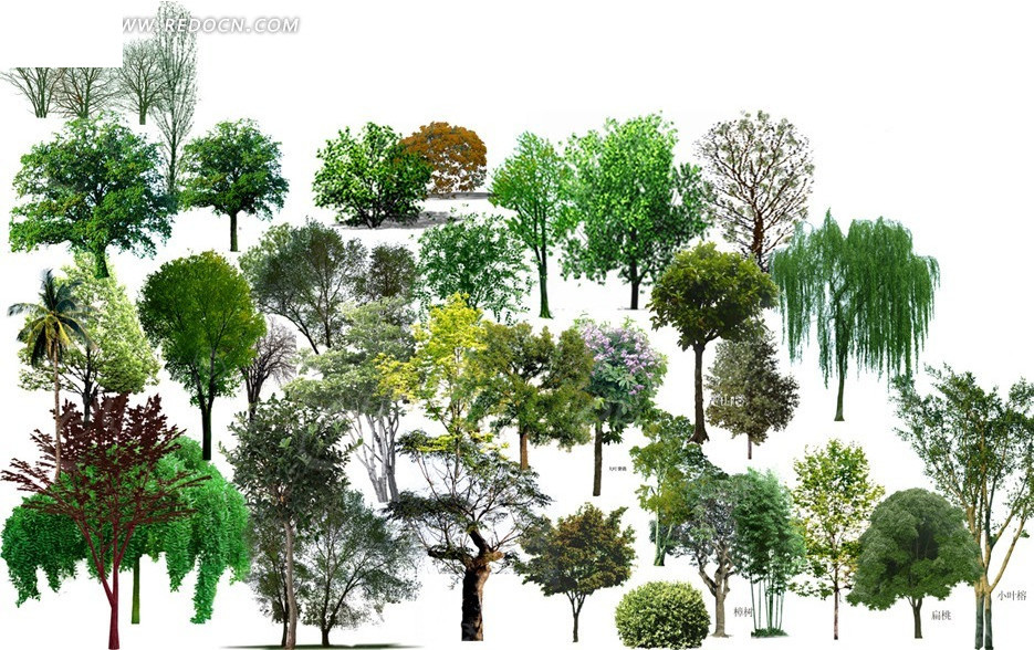 树木手绘立面固--9f