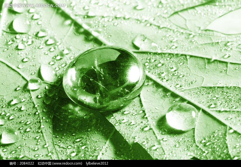 绿色树叶上的水滴图片