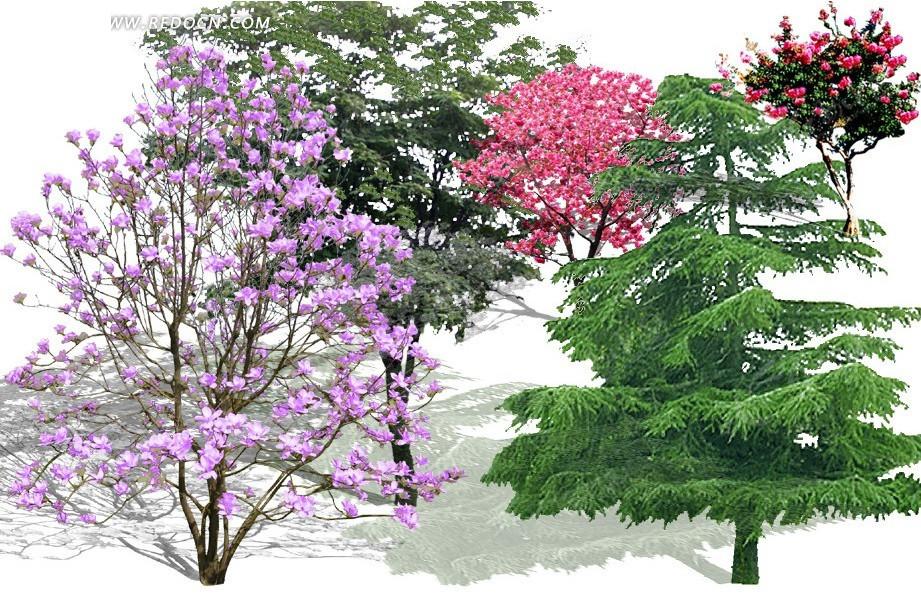园林常用植物树木