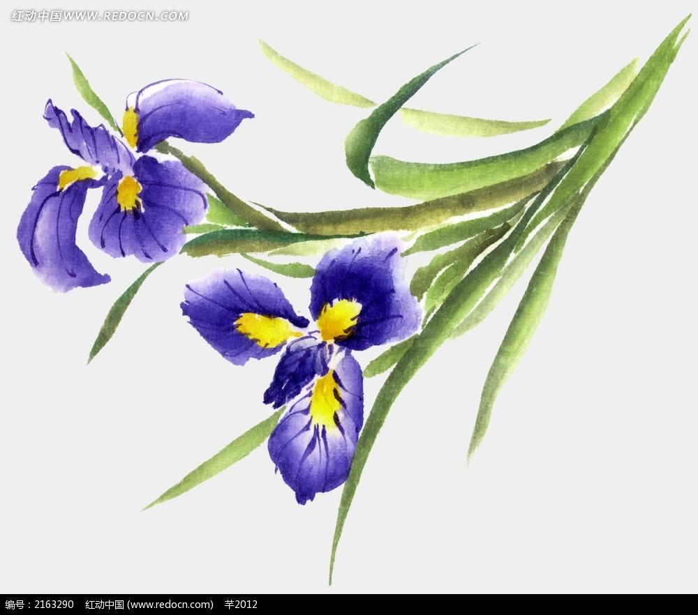 高雅的手绘鸢尾花