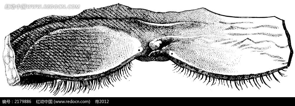 人体足底血管分布手绘插画jpg_人体器官图片_红动手机
