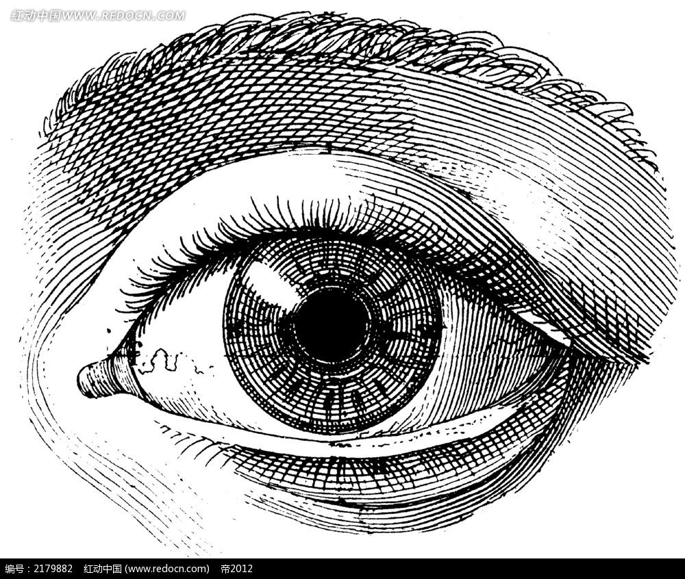 手绘眼睛插图
