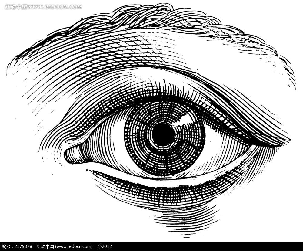 手绘眼睛插图图片jpg