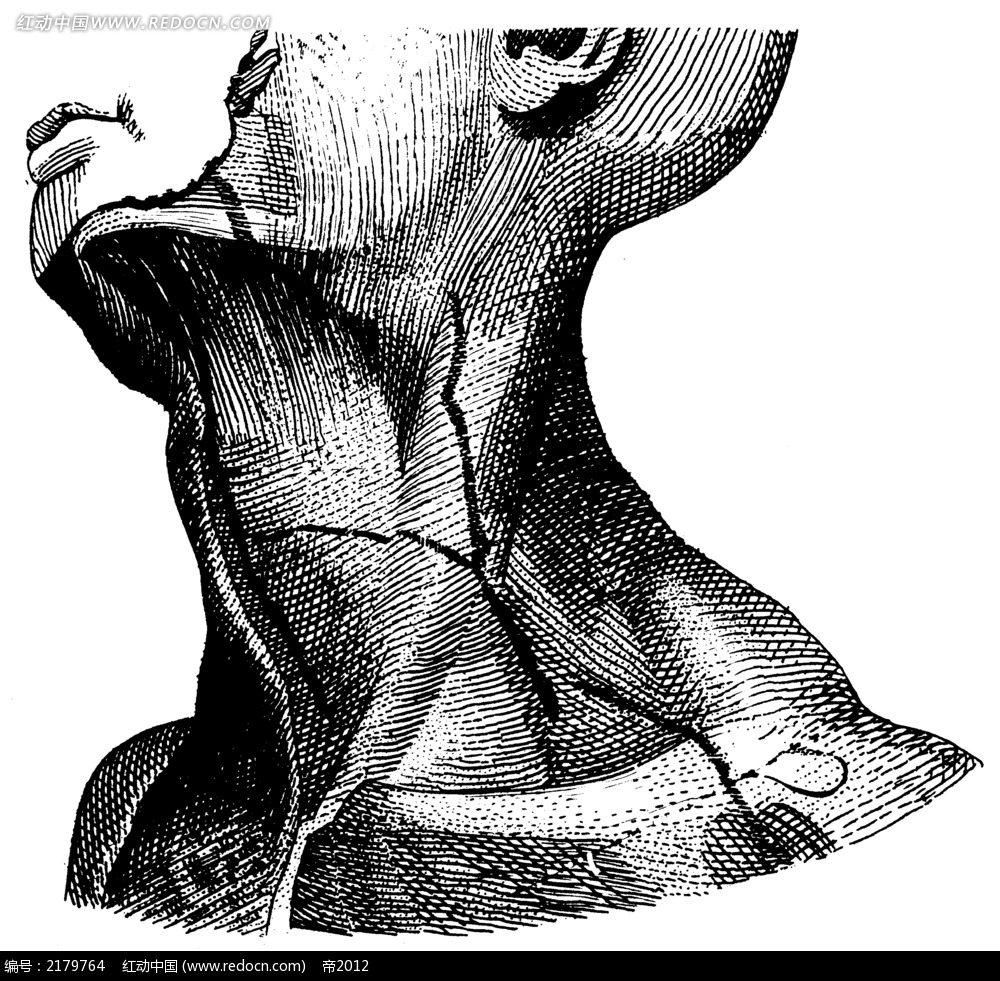 人体颈部和下颚手绘插画jgp