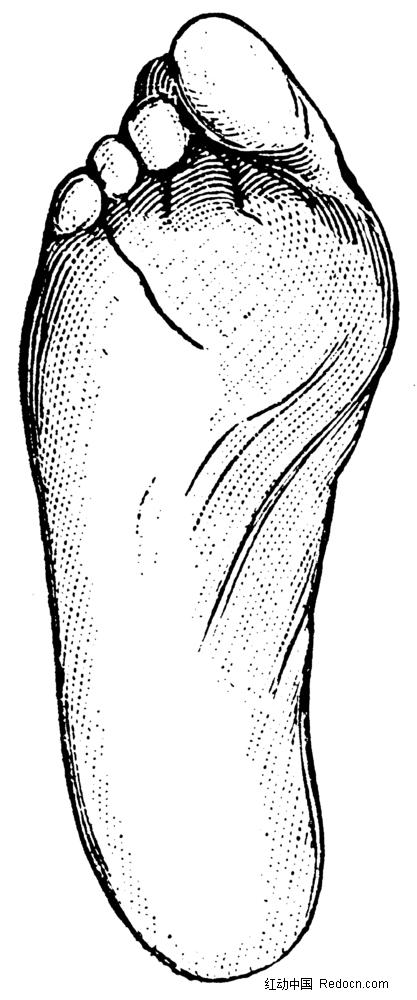 免费素材 图片素材 人物图片 人体器官 人体足底手绘插画jpg  请您