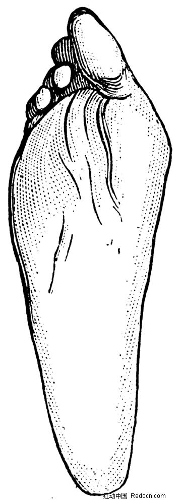 人体足底手绘插画jpg