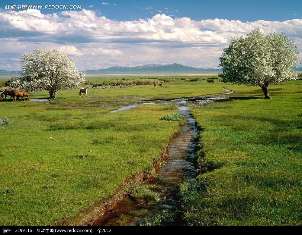 树木和草原背景素材图片