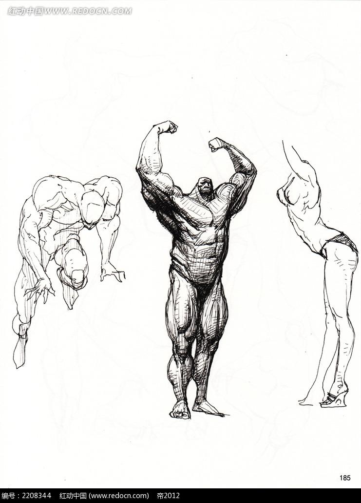人体结构骨骼肌肉素描图图片